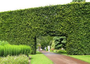 edinburgh gardens museums